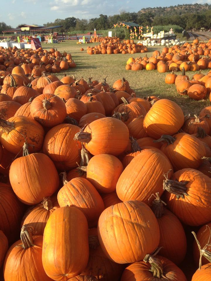 Halloween pumpkin patch austin tx