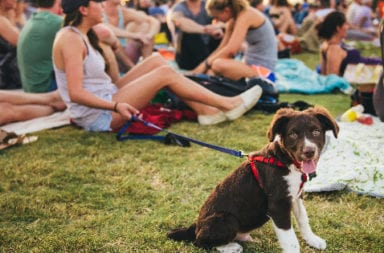 Dog Friendly guide_Share 2